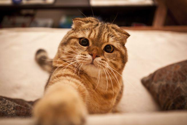 Можно ли заразиться лишаём от кошки,Post navigation