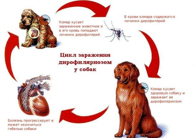 Инвазии у собак