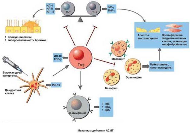 Иммунотерапия АСИТ