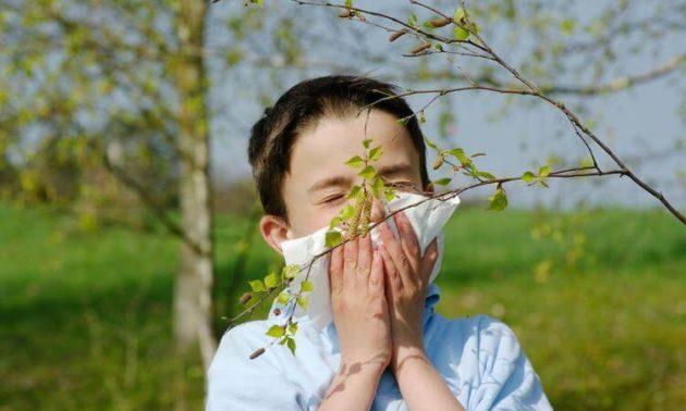 Аллергическая реакция на березу