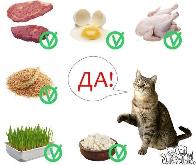 Продукты для питания кошки