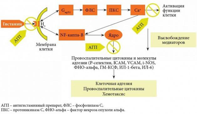 Роль антигистаминных препаратов