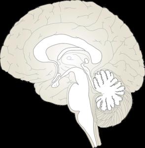 Кандидозный менингит,Post navigation
