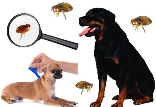 Обработка животных от паразитов