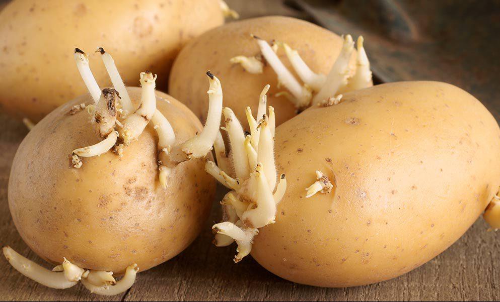 настойка из ростков картофеля для суставов