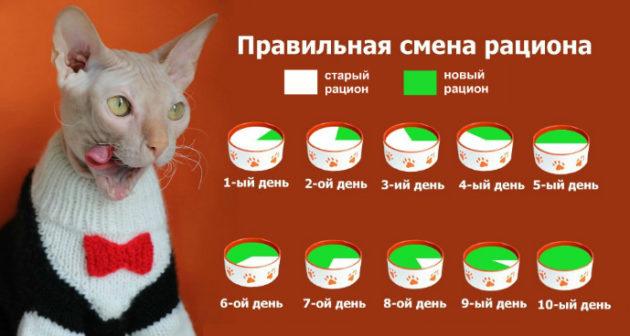 Смена рациона питания у кошки