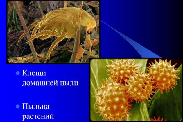 Пыльца растений один из видов аллергии