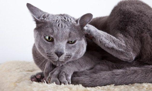 Аллергия у кошек