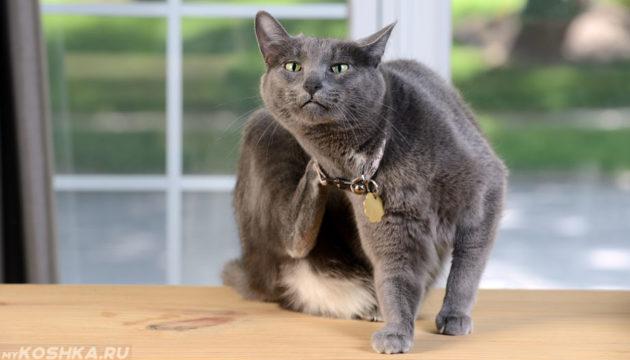 Спасаем домашнего любимца – лечение экземы у кошки