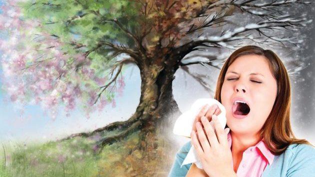 Пыльца растений аллергены