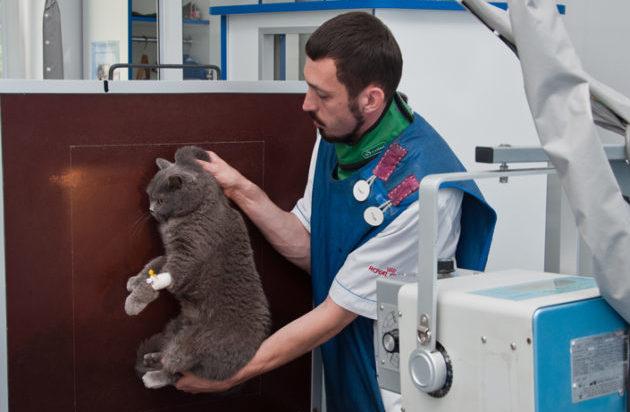 Рентген исследование животного