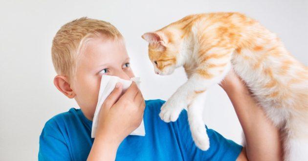 Опасна ли аллергия на кошек и как ее лечить?